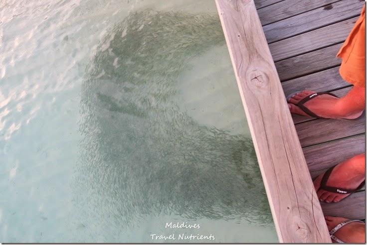 馬爾地夫 Centara渡假村 (47)