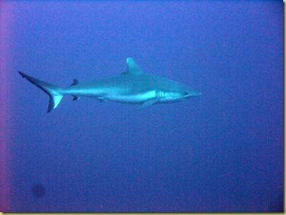 LBS Shark 2