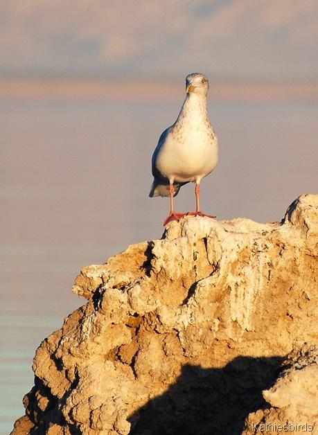 8. gull-kab