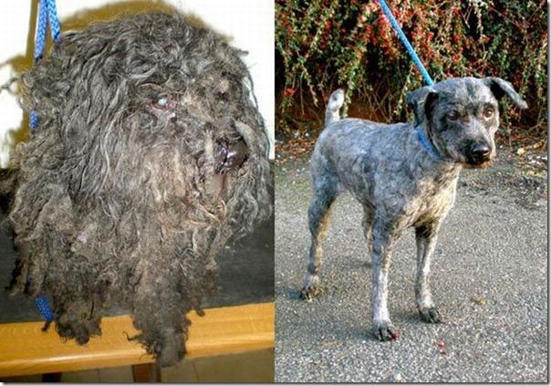 Animais Antes e Depois do Resgate (14)