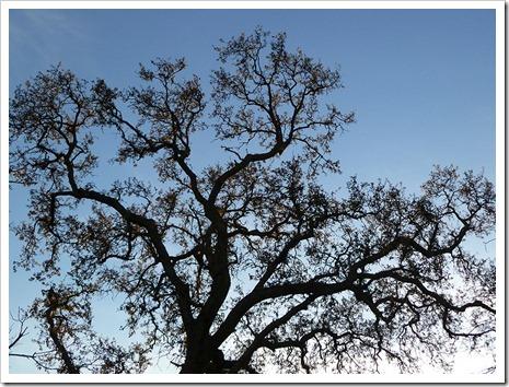 111231_tree_silhouette_1