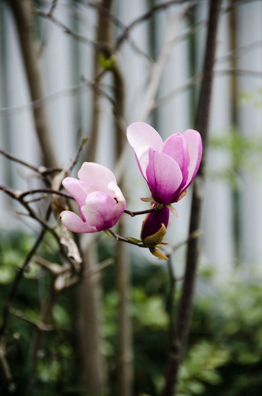 Blossoms in Savannah