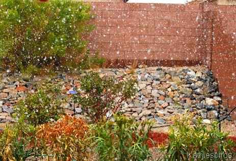 2. Backyard snow-kab