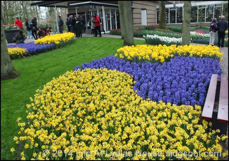 Keukenhof Gardens 31