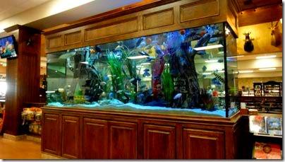 6-fish-tank