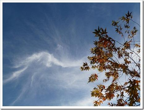 111231_tree_silhouette_11