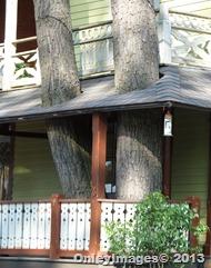 closeup tree on porch
