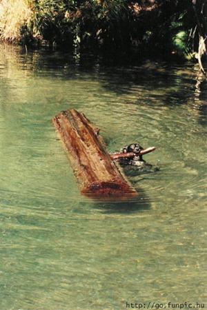 """Артемон: """"Собираю дрова для папы Карло!"""""""