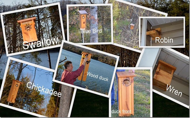 birds_bees_collage