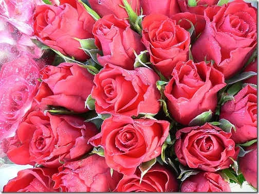 san valentin flores (20)