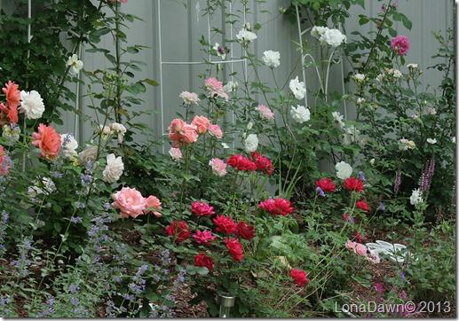 Rosegarden_632013