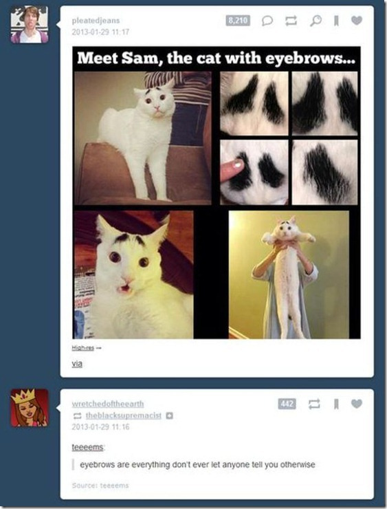 tumblr-funny-comments-14