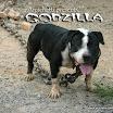 godzilla_web.jpg