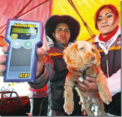 Registro de canes en El Alto