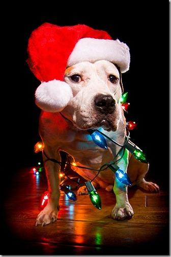 perro gorritos navidad (26)