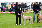 20100513-Bullmastiff-Clubmatch_30993.jpg