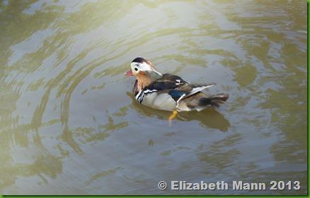 90-duck