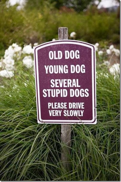 awesome-pet-owners-5