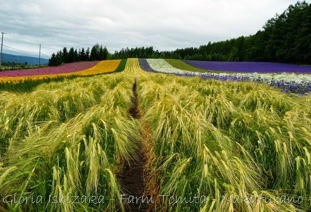 Glória Ishizaka - Farm Tomita 65