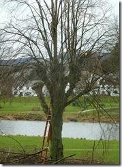 my tree2