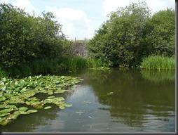 Erewash canal 08.13 006