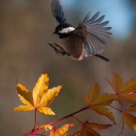 by Larry Rogers - Animals Birds