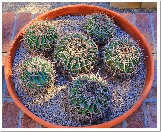 131203_TucsonBotanicalGarden_031