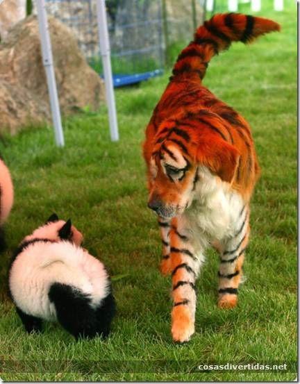 cosasdivertidas animales teñidos  (3)