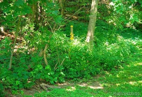 7. woodland edge