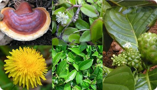 herban antioxidan