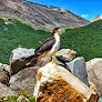 #mybeautifulearth #earthday  Argentina, Los Glaciares N.P.