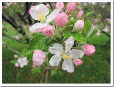 20120509_spring-property_009