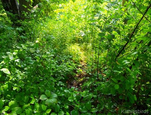 11. overgrown-kab
