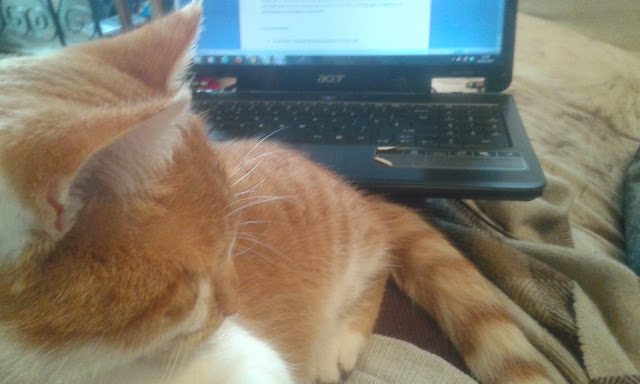 Cat on laptop - writing