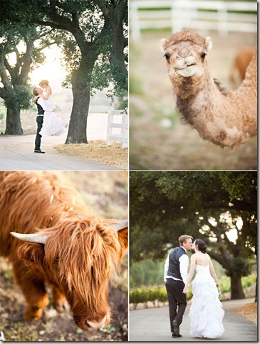 saddlerock-ranch-wedding-photo-46