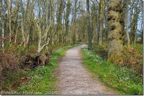 11-Mersehead-Woods