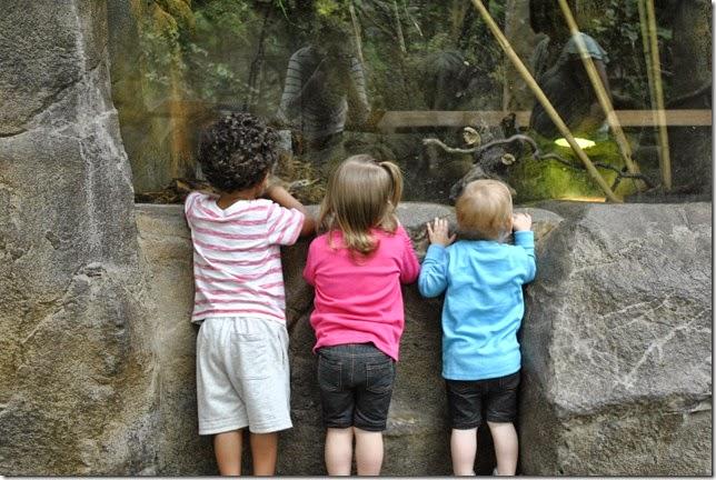 Zoo Bangerts May 13 087