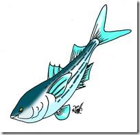 peces clipart blogolorear (44)