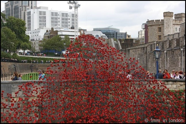 A cascade of ceramic poppies