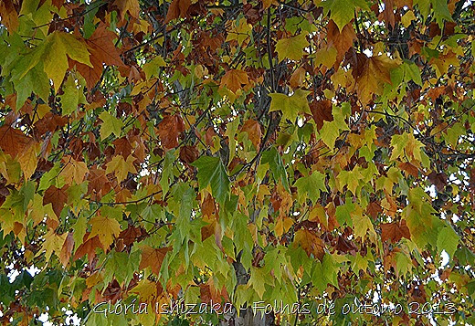 15  Glória Ishizaka - Folhas de Outono 2013