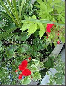 Planting Flowers 037