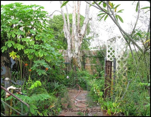 06-08 jungle3