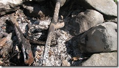 the smoldering fire