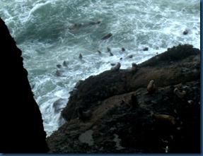 Sea lions (8)