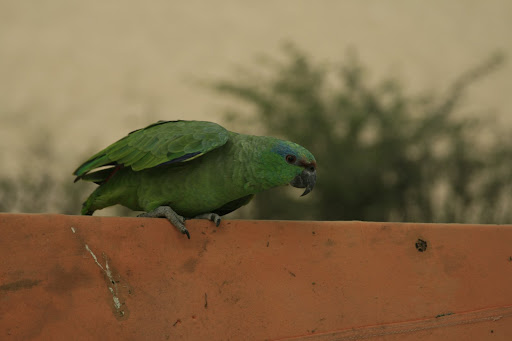 This little beauty was a resident of El Huacachnero's garden.