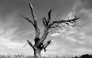 lonely_tree_widescreen