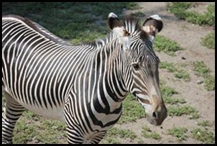 Zoo5 039
