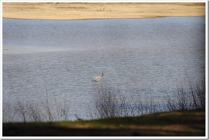 Birds-Martin Lake 102