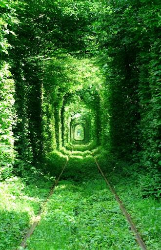 [组图] 乌克兰爱的隧道 全球最美火车道 - 路人@行者 - 路人@行者