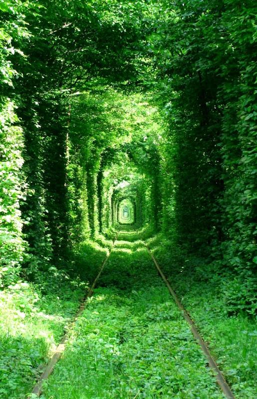 جميل الاشجار تعبر القطارات باوكرانيا